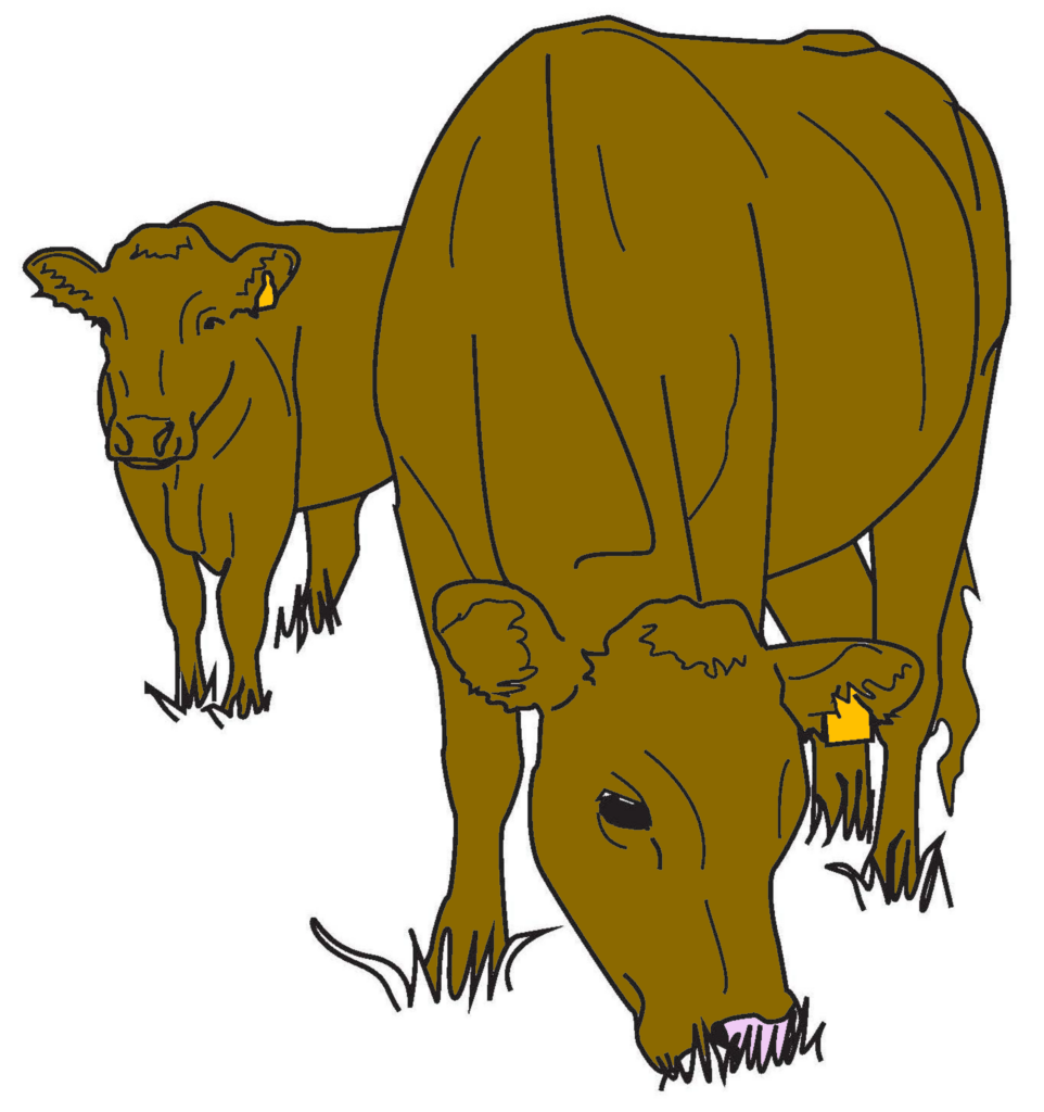 Coloring Pages: Beef